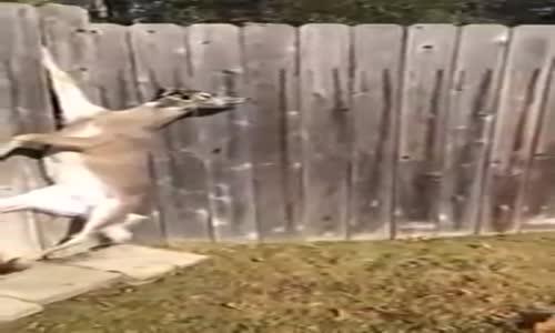 فيديو_ أمريكي ينقذ غزال علق بسياج منزله