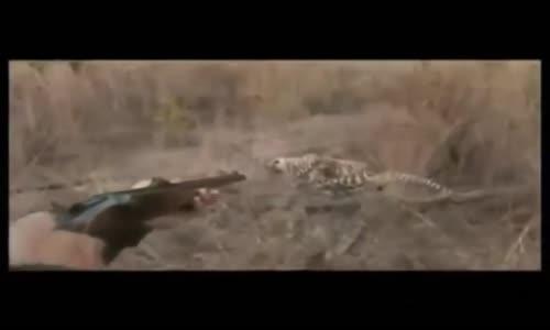 اقوى المقاطع لهجوم حيوانات مفترسة على البشر لعام    الجزء 1 HD