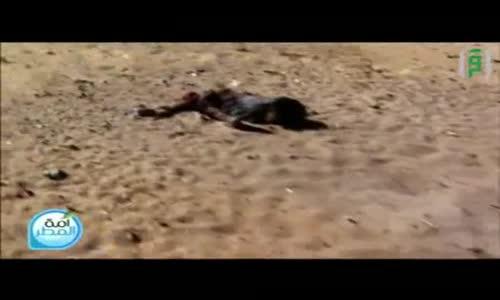 تقرير إستشهاد الأطفال الأربعة على البحر-   فلسطين تناديكم  - برنامج أمة المطر