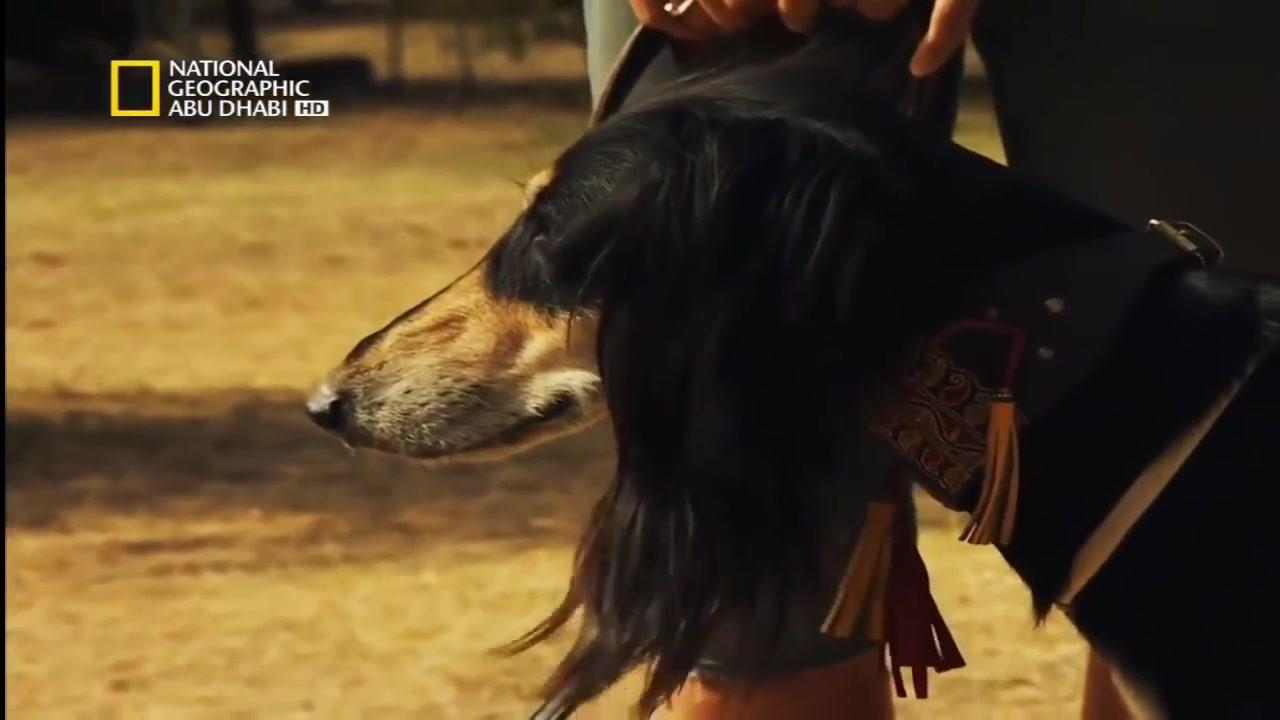 مع سيزار ميلان حب من العضة الأولى الكلب المتوحش
