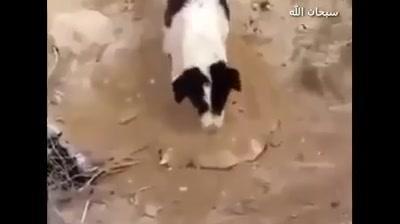 صور تستحق النشر - سبحان الله اكثر شخص يعمل دعوة راح انشر حسابه...