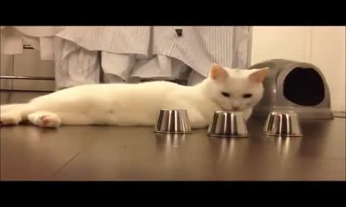 so smart cat