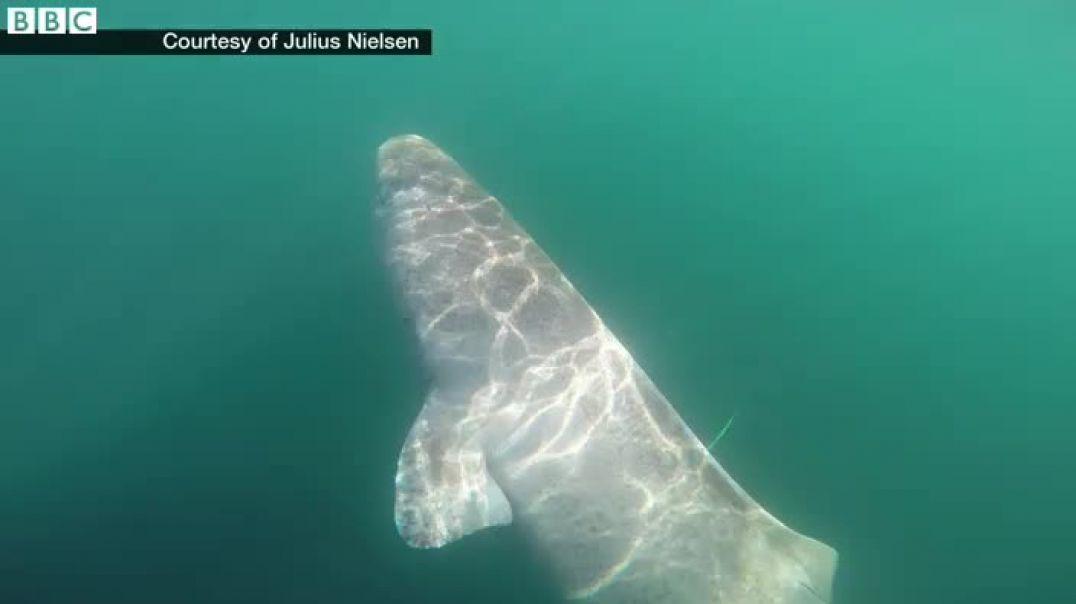 العثور على قرش حي عمره 392 عاما يتجول عبر المحيطات منذ عام 1627م